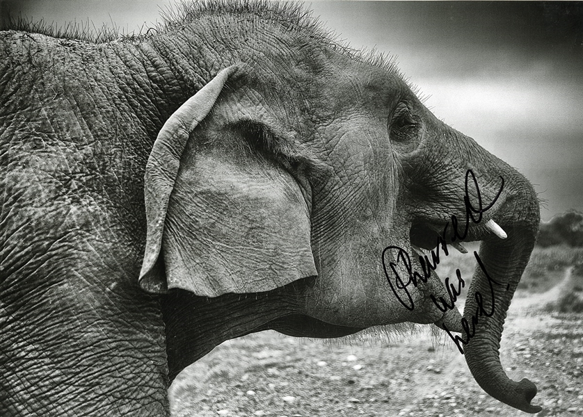 Pharrell Williams Signed Original Wildlife SOS Conservation and Care Centre Elephant Photograph